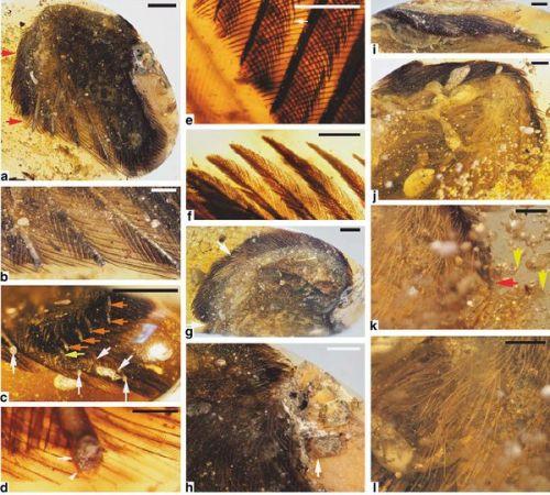 perierga.gr - Εξαφανισμένα προϊστορικά πουλιά βρέθηκαν άθικτα σε κεχριμπάρι!