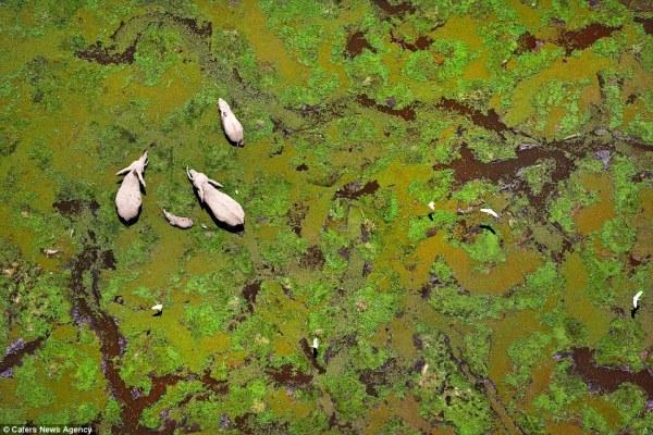 perierga.gr - Η άγρια ζωή όπως φαίνεται από ψηλά!
