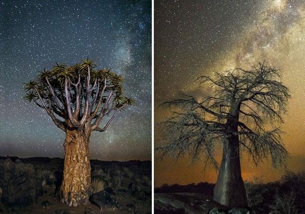 perierga.gr - Τα γηραιότερα δέντρα με φόντο το νυχτερινό ουρανό!