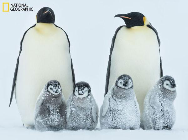 perierga.gr - Το National Geographic... χτυπά ξανά με υπέροχες εικόνες!