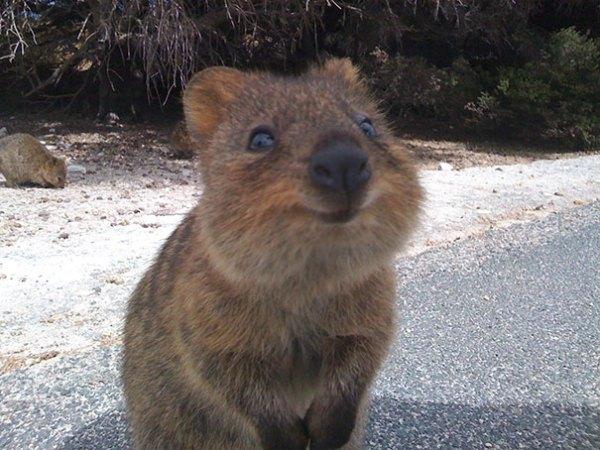 perierga.gr - Το πιο χαμογελαστό ζώο!