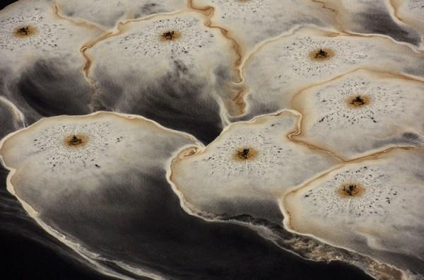 perierga.gr - Υπέροχες εικόνες από τον ετήσιο διαγωνισμό του Smithsonian Magazine