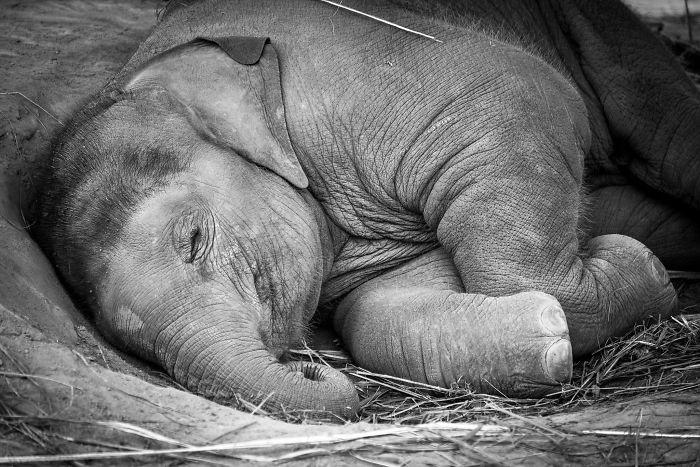 perierga.gr - Αξιαγάπητα ελεφαντάκια κλέβουν τις εντυπώσεις!
