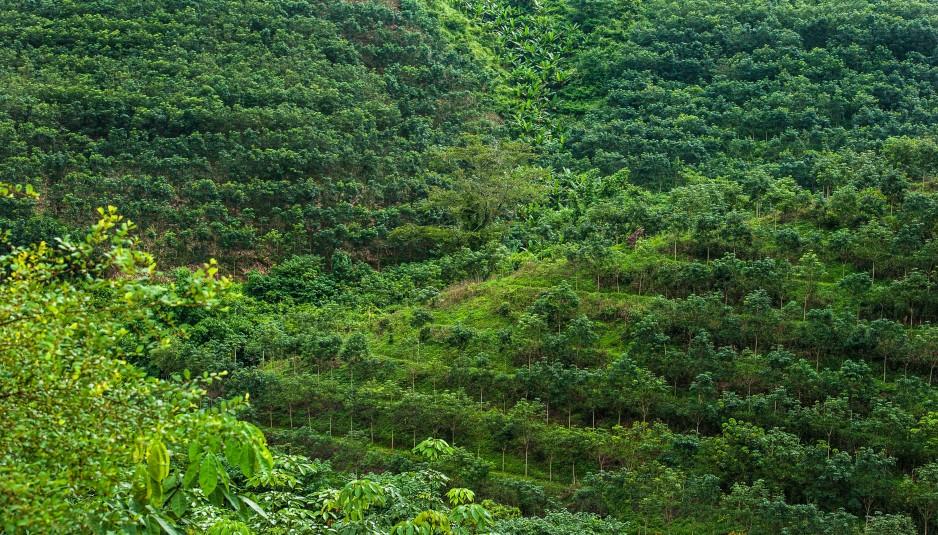 perierga.gr - Η γη έχει 9% περισσότερα δάση από όσα πιστεύαμε!
