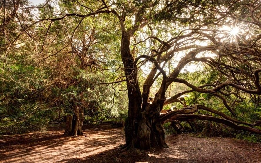 perierga.gr - Το αρχαίο κωνοφόρο δάσος του Kingley Vale
