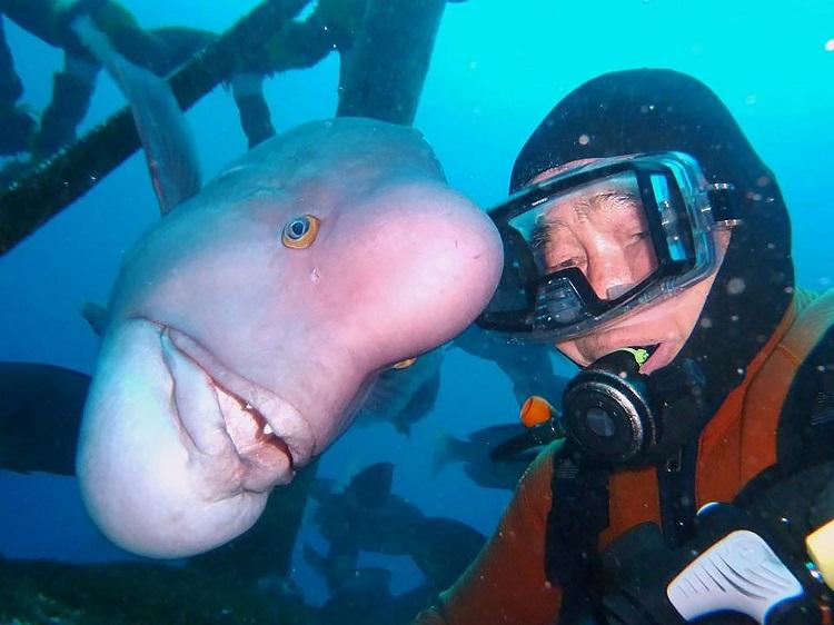 perierga.gr - Γιαπωνέζος διατηρεί 25 χρόνια φιλιά με ένα τοπικό είδος ψαριού!