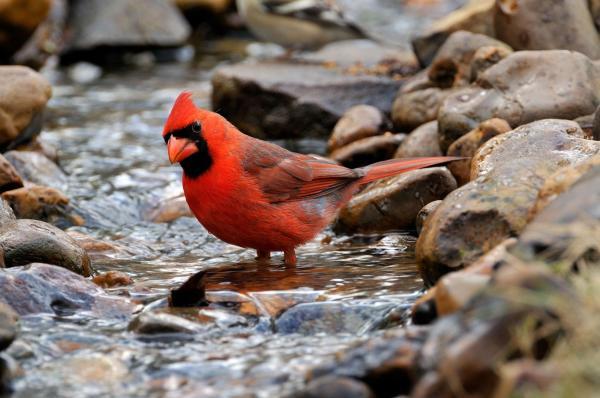 perierga.gr - Γιατί αυτό το πουλί ταΐζει τα ψάρια της λίμνης;