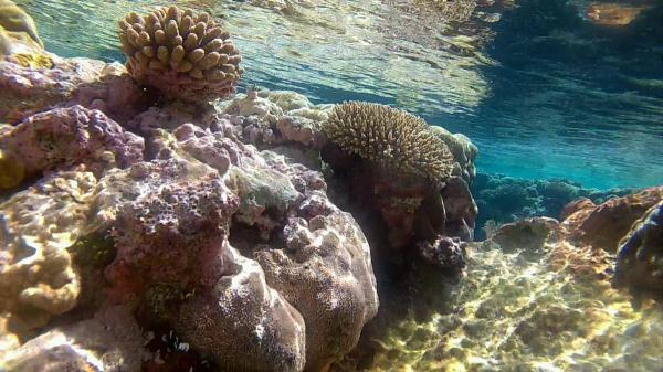 perierga.gr - Niue: Ένα απομακρυσμένο νησί χάρμα οφθαλμών!