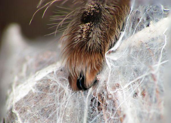 perierga.gr - Οι αράχνες έχουν... πατουσάκια!