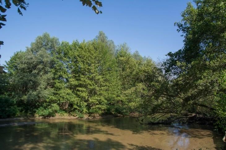 perierga.gr - Δάσος Κοτζά Ορμάν: Η τελευταία ζούγκλα της Ευρώπης είναι στην Ελλάδα!