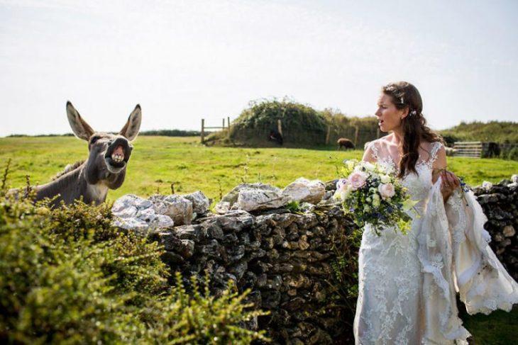 Perierga.gr - Ζώα που πρωταγωνιστούν σε φωτογραφίες γάμου