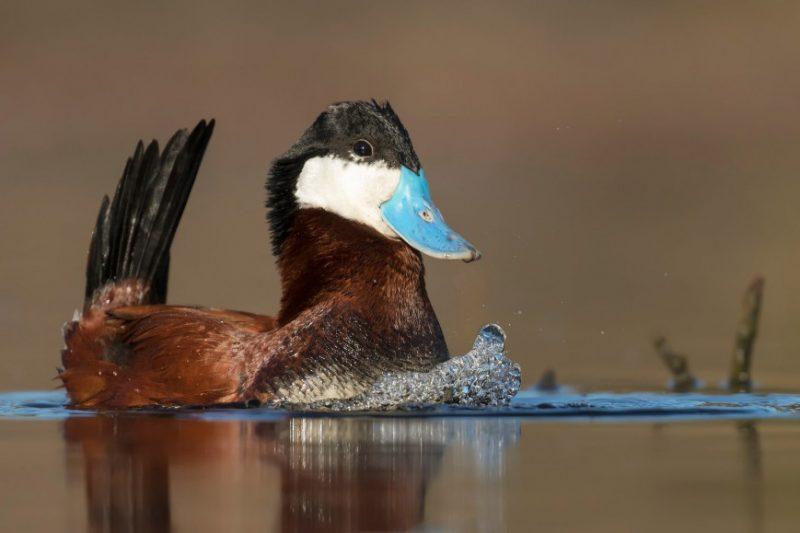 Perierga.gr - Οι νικήτριες φωτογραφίες πουλιών στο διαγωνισμό Bird Photographer του 2018