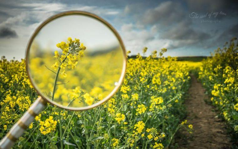 Perierga.gr - Τα ανθισμένα λουλούδια της άνοιξης μέσα από μεγεθυντικό φακό