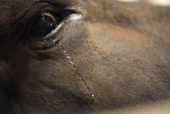 dolor-nocicepcion-animales-sufrimiento