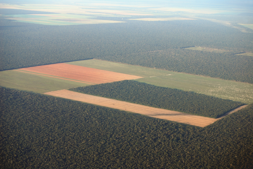 amazon-deforestation-livestock-agriculture-crops