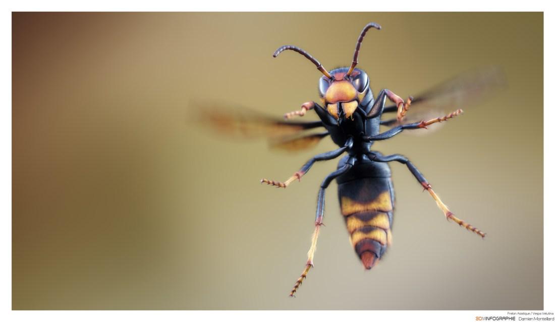 avispa-asiatica-vespa-velutina-especies-exoticas-aloctonas-alien-invasoras-vias-introduccion-ecosistemas-fronteras-Francia