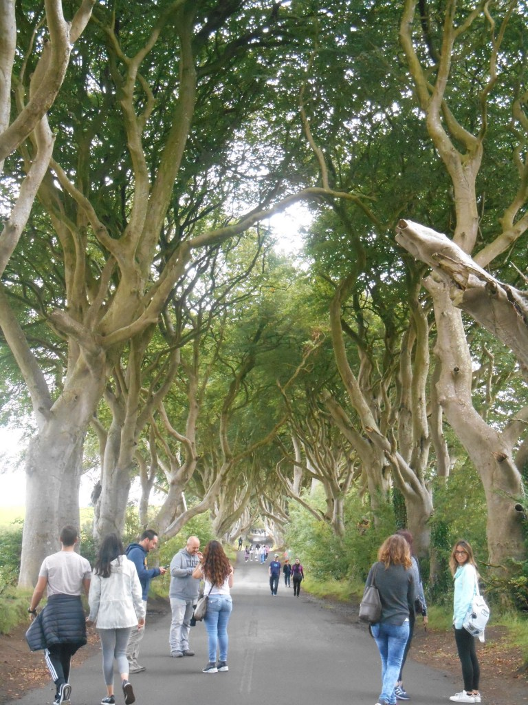 dark-hedges-Northern-Ireland-antrim-County-game-of-thrones-beeches-trees-belfast-mysteries-mystery-ghosts-paranormal-phenomena-history-travel