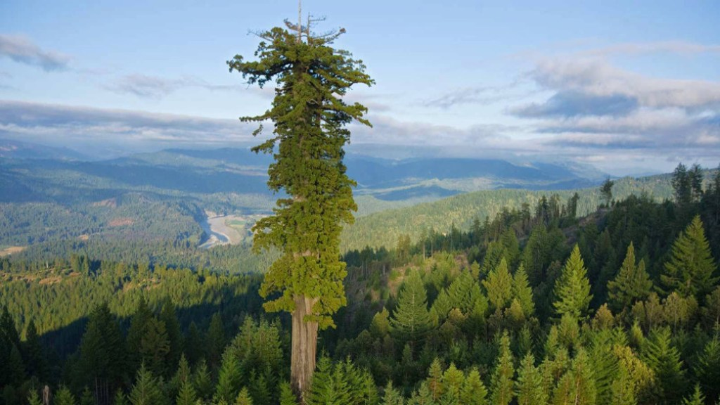 sequoia-sequoiadendron-giganteum-general-sherman-biggest-living-being-california-biomass-volume