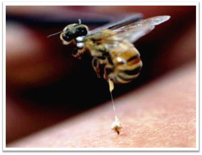 bees-bugs-insects-hymenoptera-biology-zoology-animalys-curiosities-evisceracion