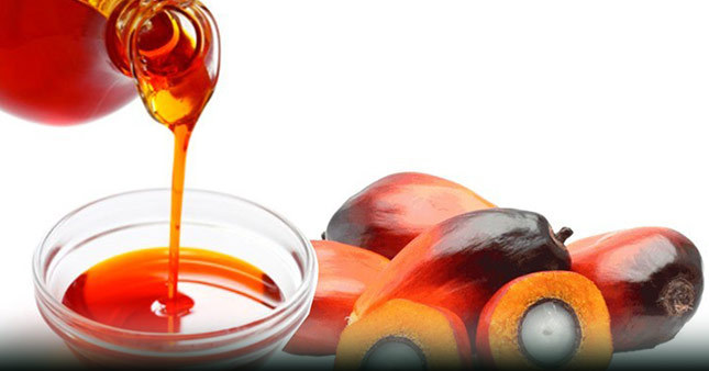 refined palmitic acid-unsaturated fatty acids-saturated fatty acids-palmitic acid-palm oil-kernel oil-elaeis guineensis