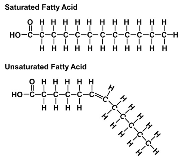 unsaturated fatty acids-saturated fatty acids-palmitic acid-palm oil-kernel oil-elaeis guineensis-environment-rainforest-biodiversity loss-palm oil indonesia-palm oil malaysia