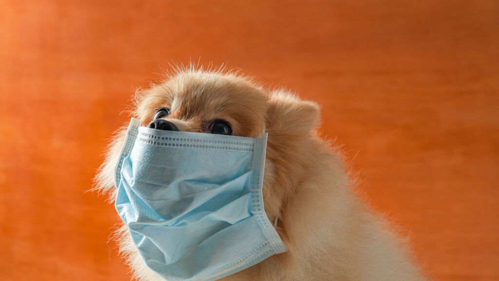 dogs-infection-infected-symptoms-sars-cov-2-virus-virology-medicine