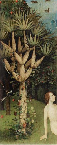 drago-dracaena draco-jardin de las delicias