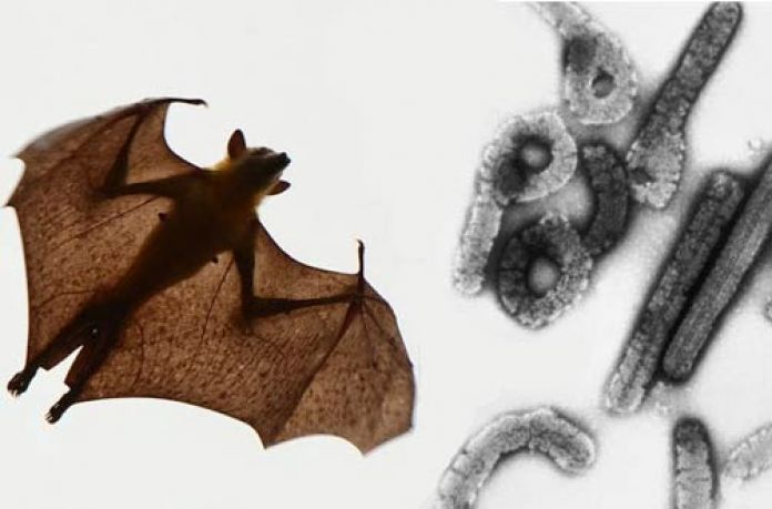 marburgvirus-ebola-coronavirus-pandemic-virus-microbiology-fruit bat-biological weapon