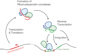 reverse transcriptase-human endogenous retrovirus-herv-vaccine hoaxes