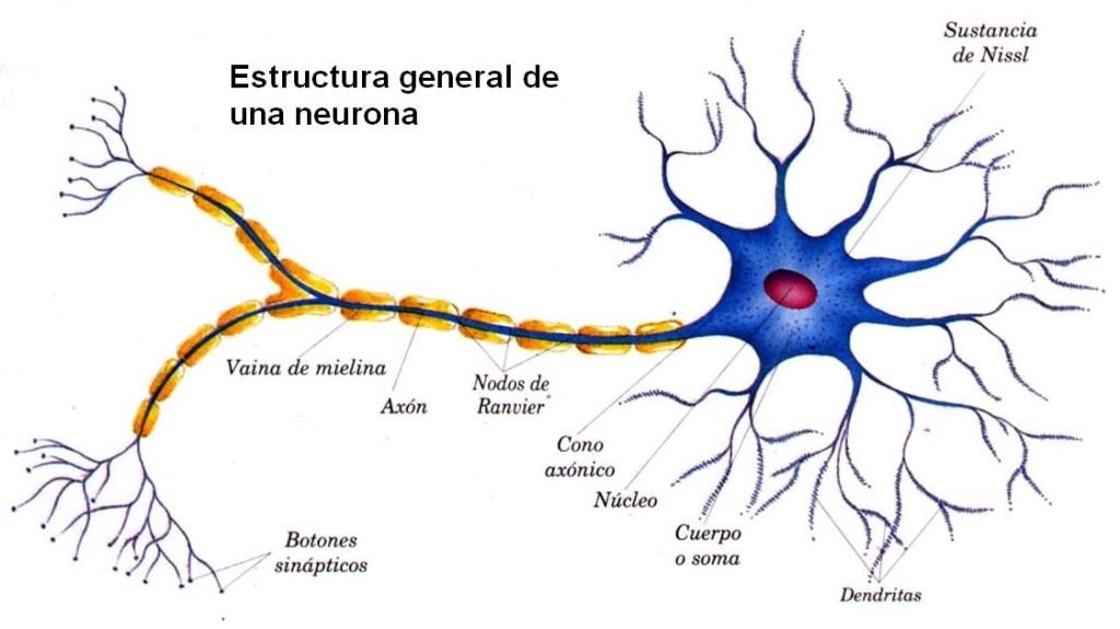esclerosis multiple-enfermedades neurodegenerativas-vacunas arnm-covid 19- sars cov 2-esquizofrenia