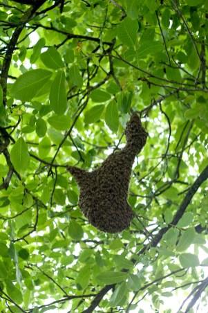 včely pre PC 1