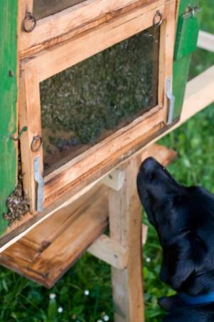 včely pre PC 16