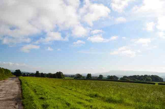 a field
