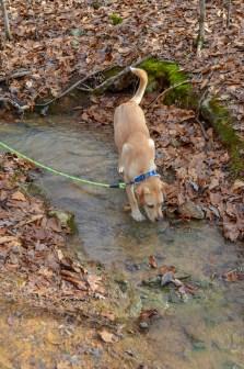Gimli found a stream