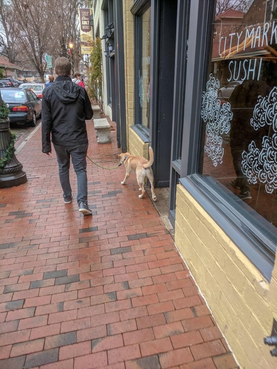 walking through dog friendly Raleigh