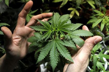3827094934001_4258633635001_260515---marihuana