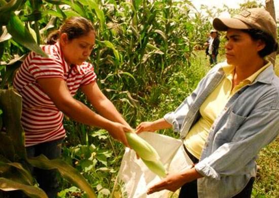 Mujeres-rural