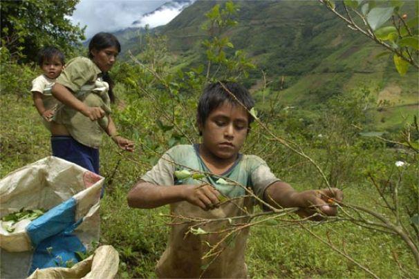 cultivos-coca-niños
