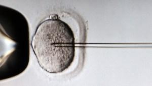 """¿Será posible cambiar el ADN? Japón busca legalizar la """"redacción"""" de genes en embriones humanos"""