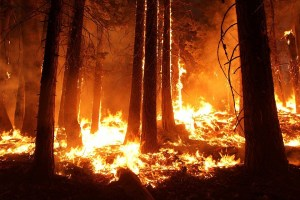 Los incendios más selectivos y extraños de la historia