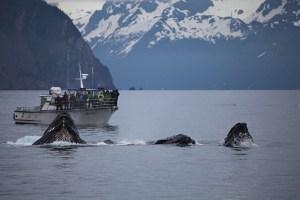 Barco japonés es golpeado por una criatura gigante