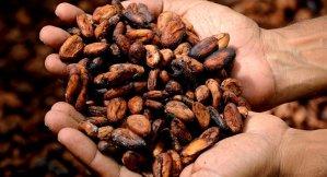 Nestlé reconoce que explota a niños de África