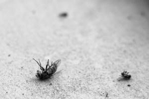 Muerte masiva de insectos