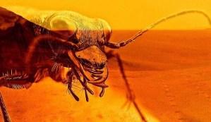 Un reconocido entomólogo asegura que existen insectos y reptiles en Marte