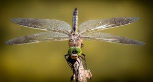 La CIA desclasifica documentos sobre un robot insecto espía