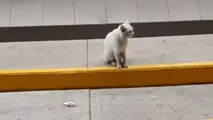 Un gato callejero entra con una mujer en un supermercado y le señala su comida favorita
