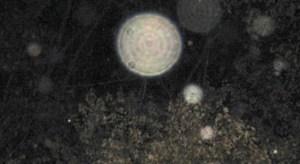 Orbes, un misterio fotográfico