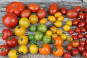 ¿Conocías todos estos beneficios para la salud de los tomates?