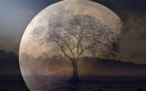 """Científicos buscan los """"árboles lunares"""" de las semillas que fueron al espacio"""
