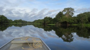 Descubrimientos Fuera de lo Normal Hechos en la Amazonía